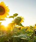 Cecilia Cavalcante